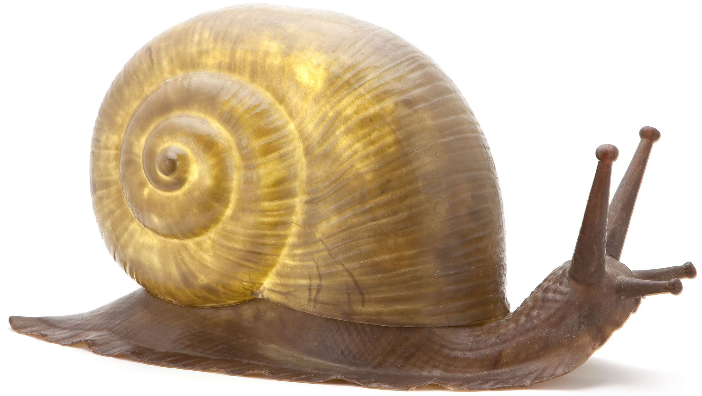 Related Items Snail Shell